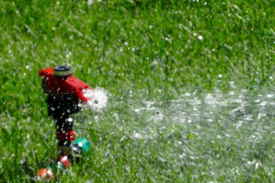 1-keeping-your-garden-green-during-water-restrictions-900x600-1-4928707