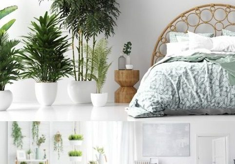 crisp-whites-wooden-features-greenery-throughout-2712313